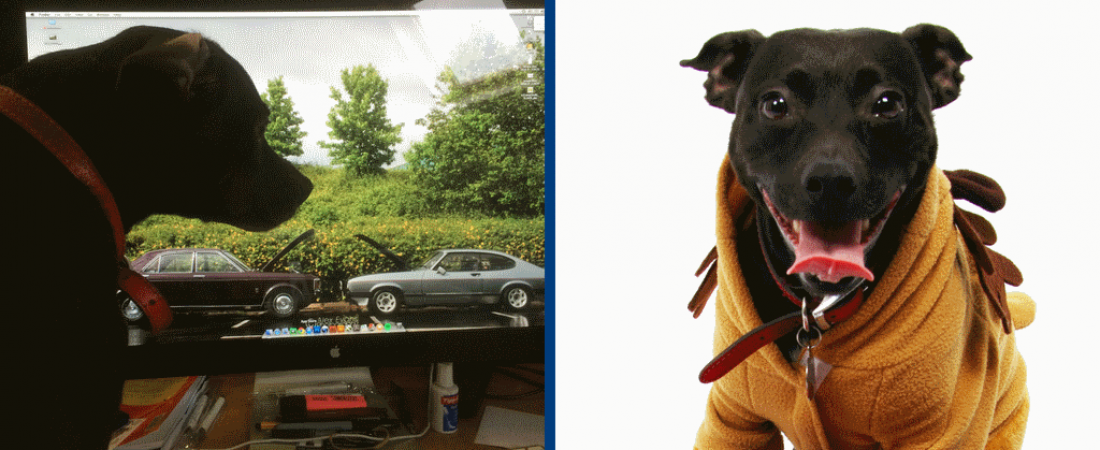 20 Years in Business – An Interview with The Head of Morale (aka Patch the Dog!)